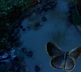 blue butterfly over starfish
